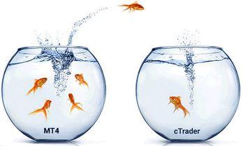 mt4-cTrader.JPG